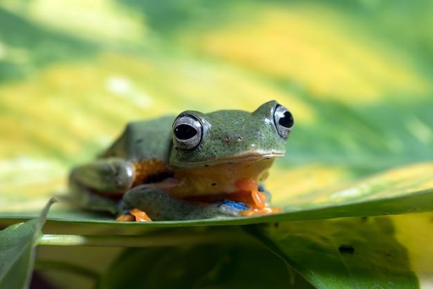 葉の上に腰掛けて緑の木が飛んでいるカエル