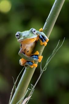 Green tree frog on bamboo tree