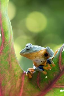 잎에 매달려 녹색 나무 개구리