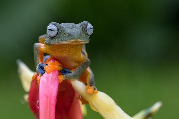Green tree frog perched on a flower petals