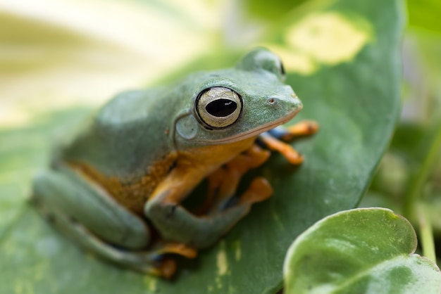 Green tree frog perched on a leaf