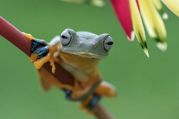 녹색 나무 개구리는 꽃잎에 자리 잡고