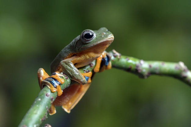 Green tree frog perched on a tree branch