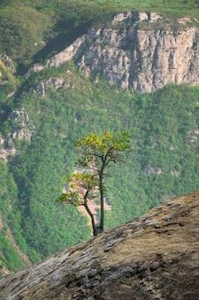 岩の上に生えている緑の木。垂直方向のビュー。