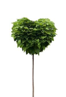 Green tree in heart shape isolated