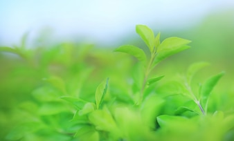 Green tree leaf on blurred background in the park with clean pattern.