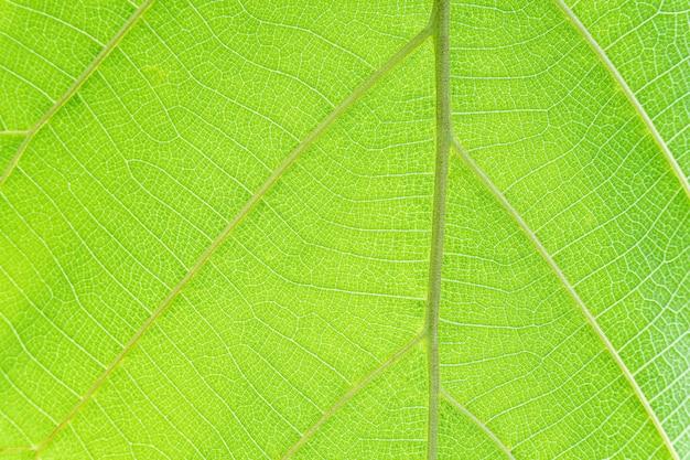 Green tree leaf texture