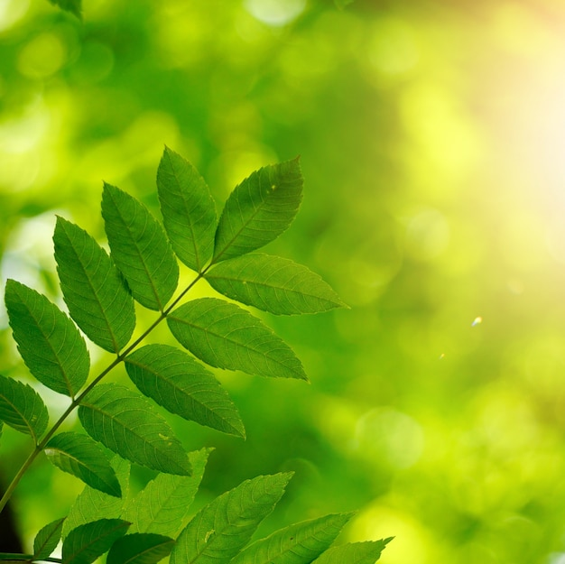 Green tree leaves and branches in the nature in summer