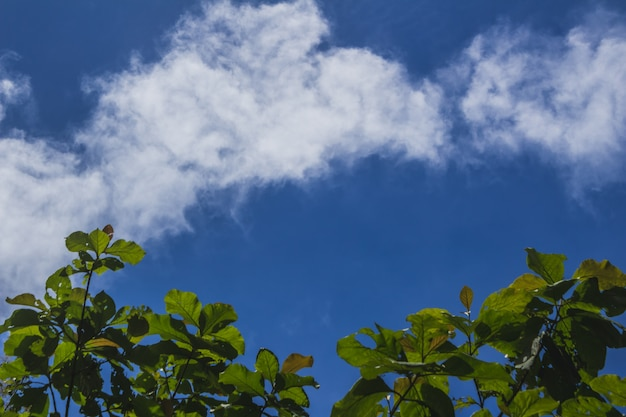 Green tree leaves with a blue sky in the background