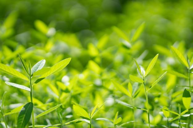 緑の木の自然の背景。