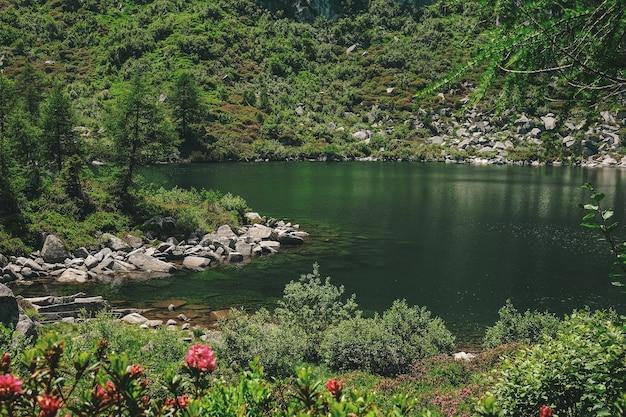 Albero verde vicino al corpo idrico