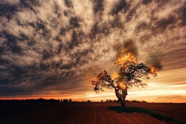 曇り空の下の茶色のフィールドに緑の木