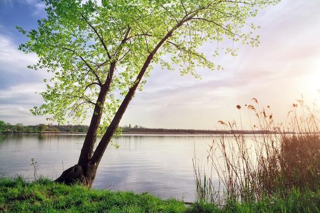 Зеленое дерево на берегу водоема