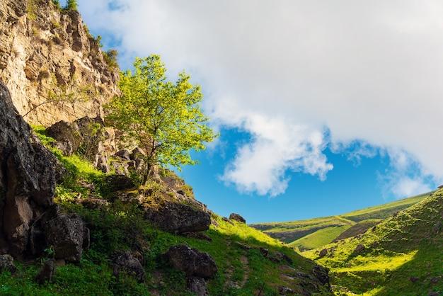 산 경사면에 녹색 나무
