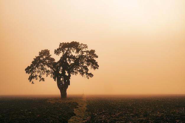 日没時のフィールド上の緑の木