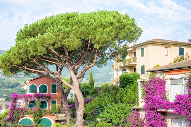 Green tree and purple flowers, santa margherita ligure, italy