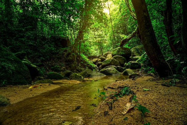 Green tree and rock in tropical forest.