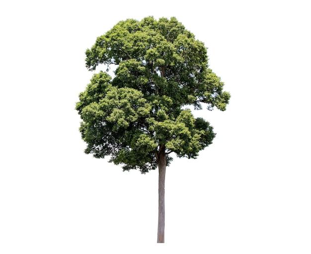 Вид сбоку зеленое дерево, изолированные на белом фоне