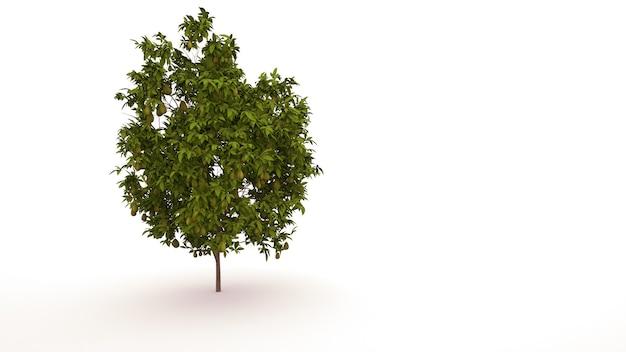잎, 흰색 배경에 고립 된 정원 요소와 녹색 나무. 과일, 3d 일러스트와 함께 낙엽수입니다.