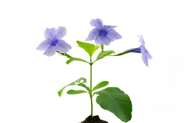 토양에 보라색 꽃이 있거나 고립 된 토양에서 자라는 녹색 나무