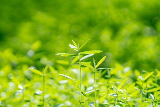 緑の木、若い木緑の自然の背景