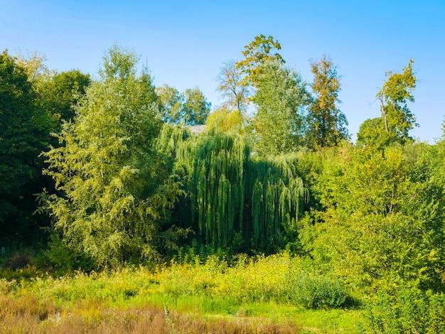 青い空を背景に緑の木々。自然の風景