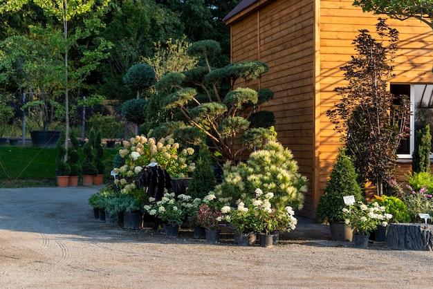 조경을 위해 정원 센터의 욕조에 푸른 나무와 관목