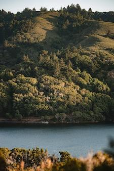 昼間の水域の横にある緑の木々