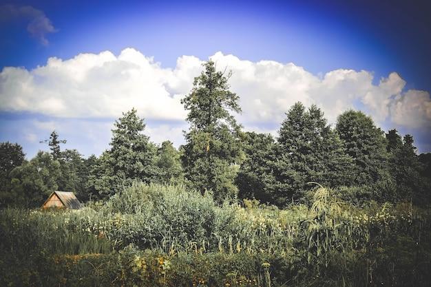 푸른 나무, 덤불, 잔디, 그리고 흰 구름이 있는 여름 하늘