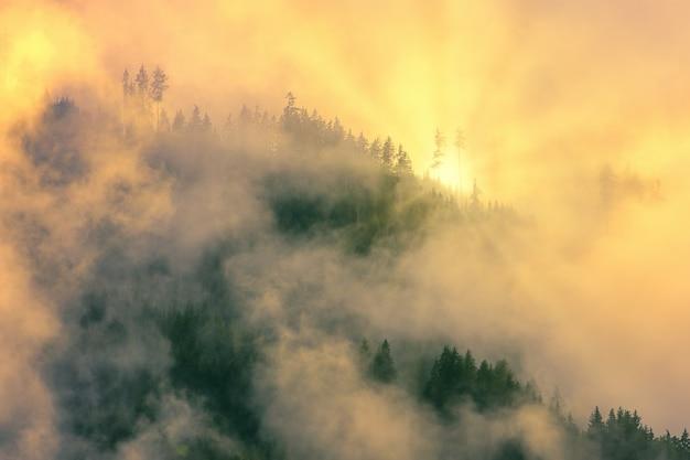 Alberi verdi coperti dalla nebbia