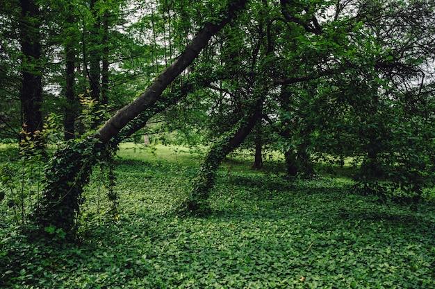 숲에서 녹색 식물으로 덮여 푸른 나무