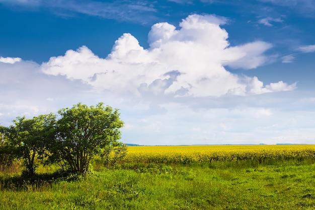 晴天時の菜種とフィールドの緑の木々の端