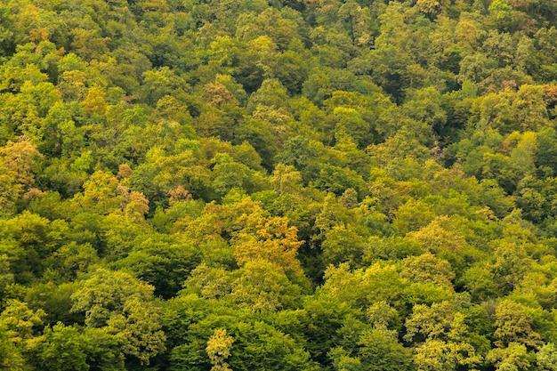Зеленые деревья лес приближается осень красивый фон с видом сверху на лес