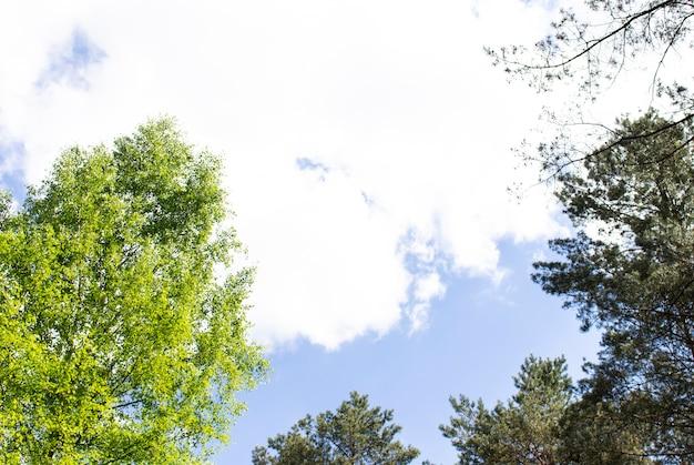 Зеленые деревья сверху в лесу с голубым небом и солнечными лучами, сияющими сквозь листья. вид снизу.