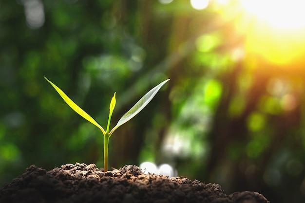 푸른 나무는 아침에 자연적으로 자랍니다.