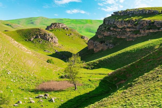 계곡의 푸른 나무