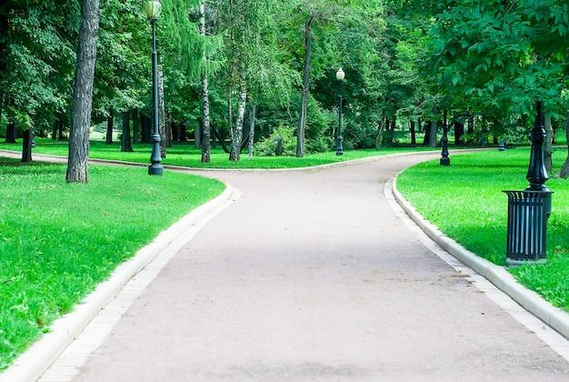 Зеленые деревья в городском парке