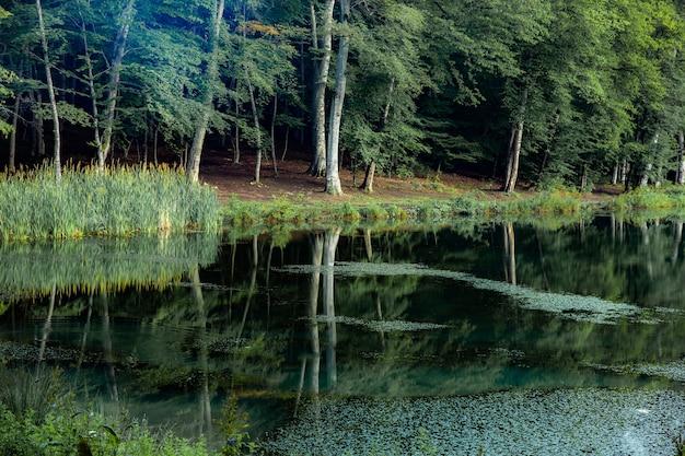 Зеленые деревья в лесу и озере
