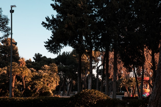 森や庭の緑の木々
