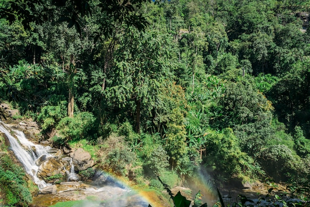 Green trees in the middle of the jungle next to a waterfall