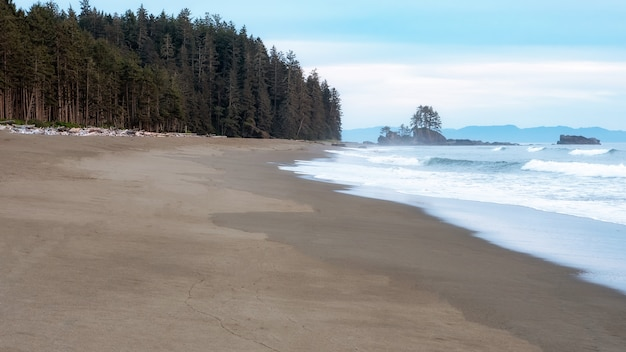 바다 근처 푸른 나무
