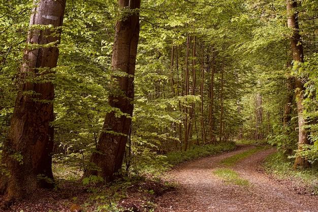 갈색 비포장 도로에 푸른 나무