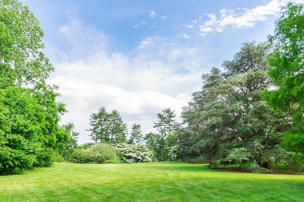 Зеленые деревья на траве луга.