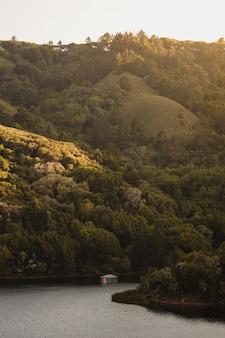 낮 동안 산에 푸른 나무