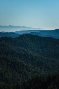 昼間の山の緑の木々