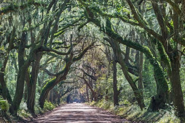 緑の木々のトンネル。