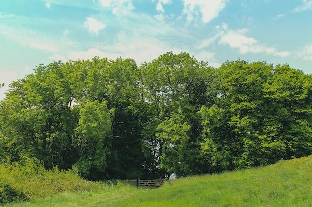Lodmoor country park, weymouth, dorset의 밝은 하늘 아래 푸른 나무