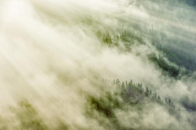 白い雲の下の緑の木々