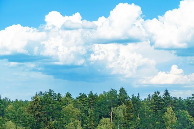緑の木のてっぺんと美しい曇りの青い空。森の風景が上から空のパノラマを争います。