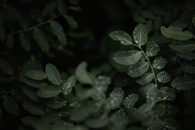 Green tropica leaves in dark background.low key and macro photography with super shallow depth of field.